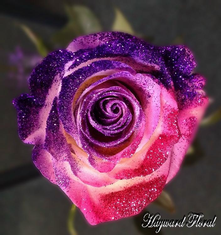 Glitter Tip Roses 31