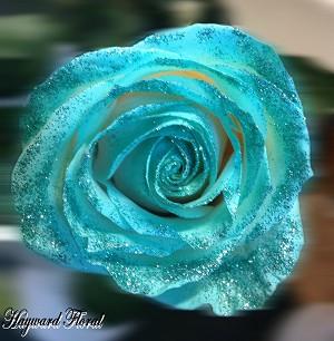 Glitter Tip Roses 30 Aqua