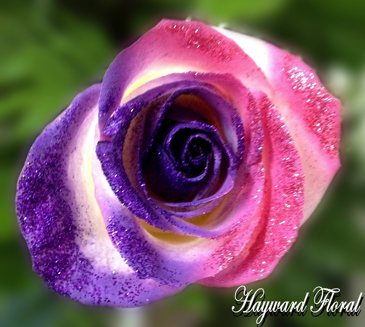 Glitter Tip Roses 21