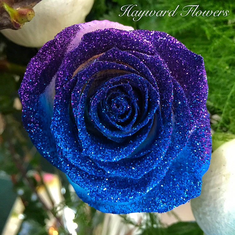 Glitter Tip Roses 34 Royal Blue And Purple