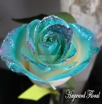 GLITTER Tip Roses # 28   AQUA with PINK