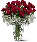TF117-1  - 2 Dozen South American Long Stem Roses (Compact) (V)